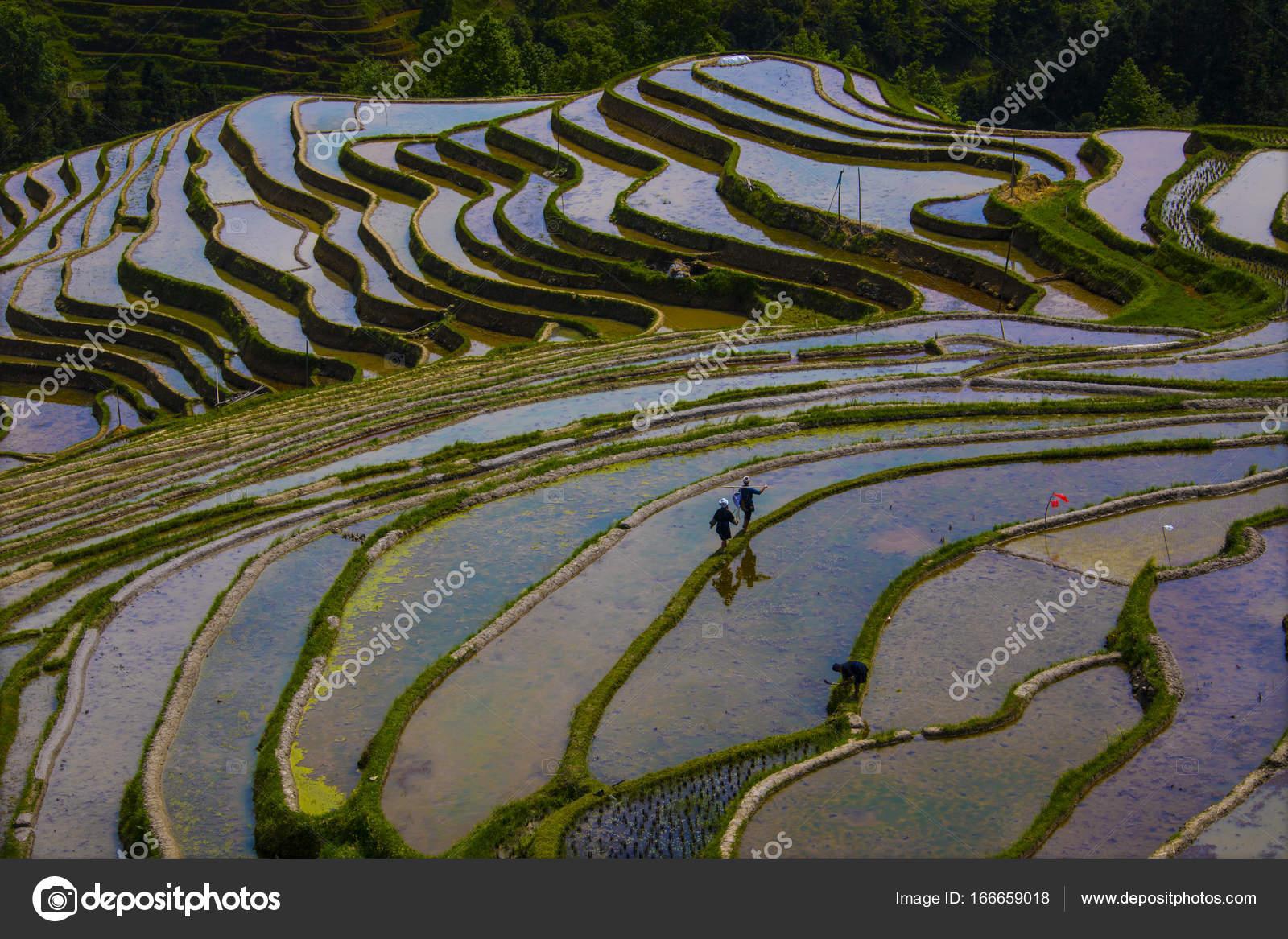 Terraza De Banco De China Foto De Stock Mrmo 166659018