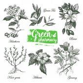 Fotografie drawings of herbs Green Pharmacy.