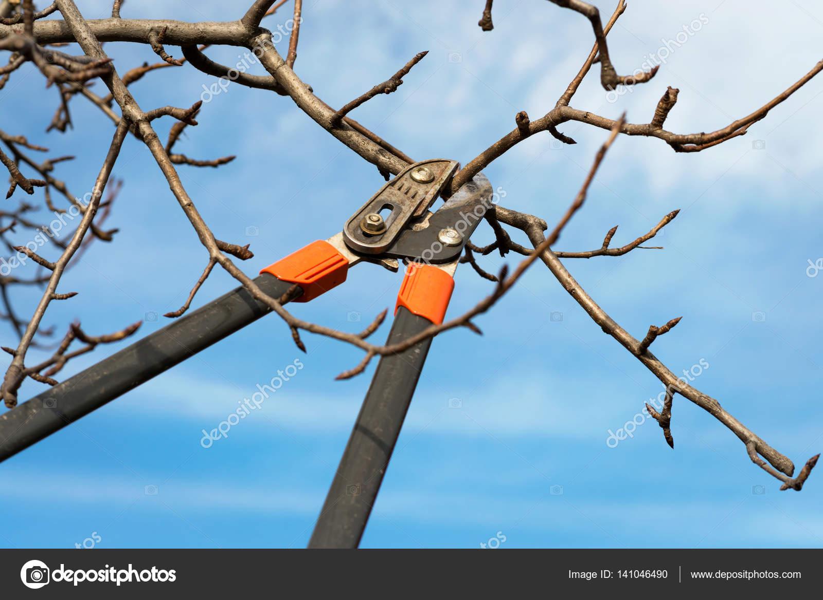 Winter Baum Beschneiden Stockfoto C Ueuaphoto 141046490