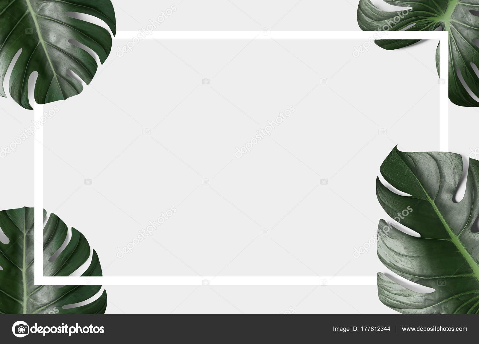 Green Tropical Leaves White Black Frame Light Background Stock Photo C Brocrock 177812344 Find images of tropical leaves. https depositphotos com 177812344 stock photo green tropical leaves white black html