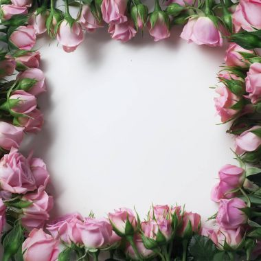 beautiful pink rose flowers in form of frame isolated on white background