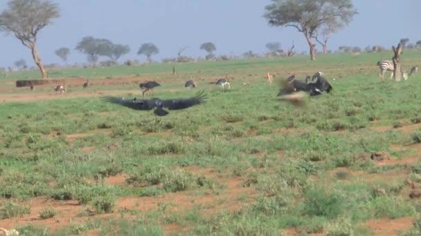 Animali di safari savana in Kenya