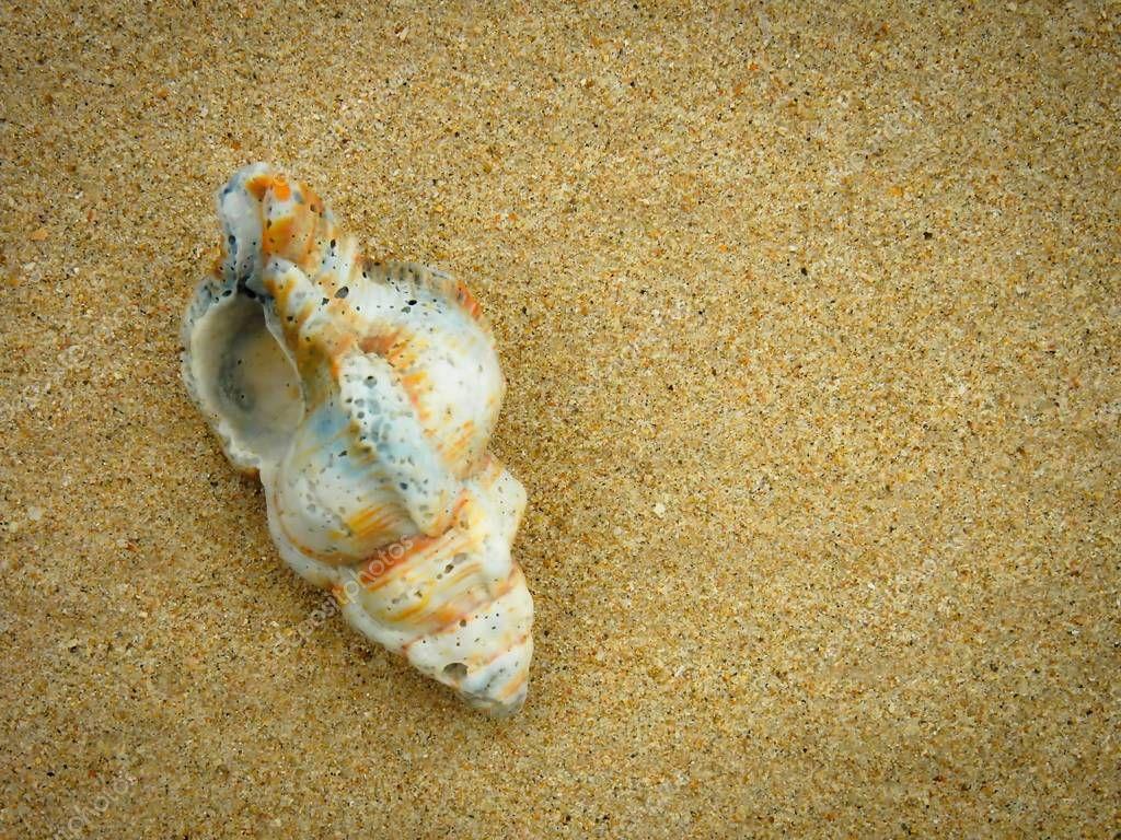 Seashell on the sandy beach of Khao Lak