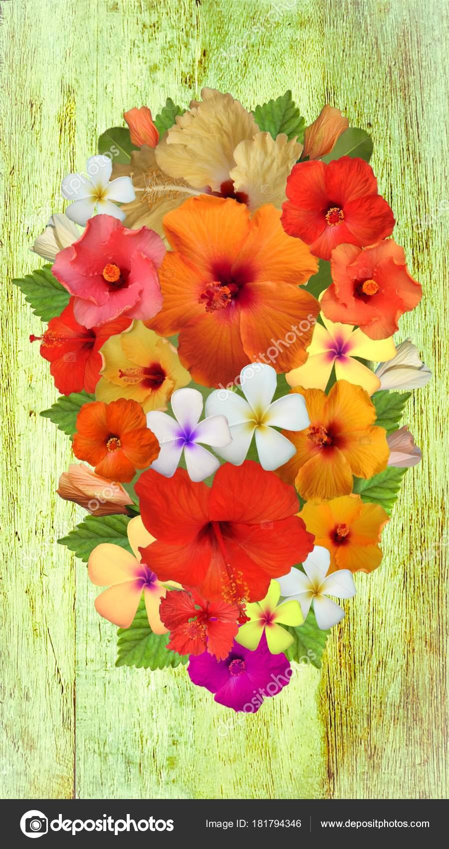 Hibiscus Flowers Different Colors — Stock Photo © Schwerin #181794346