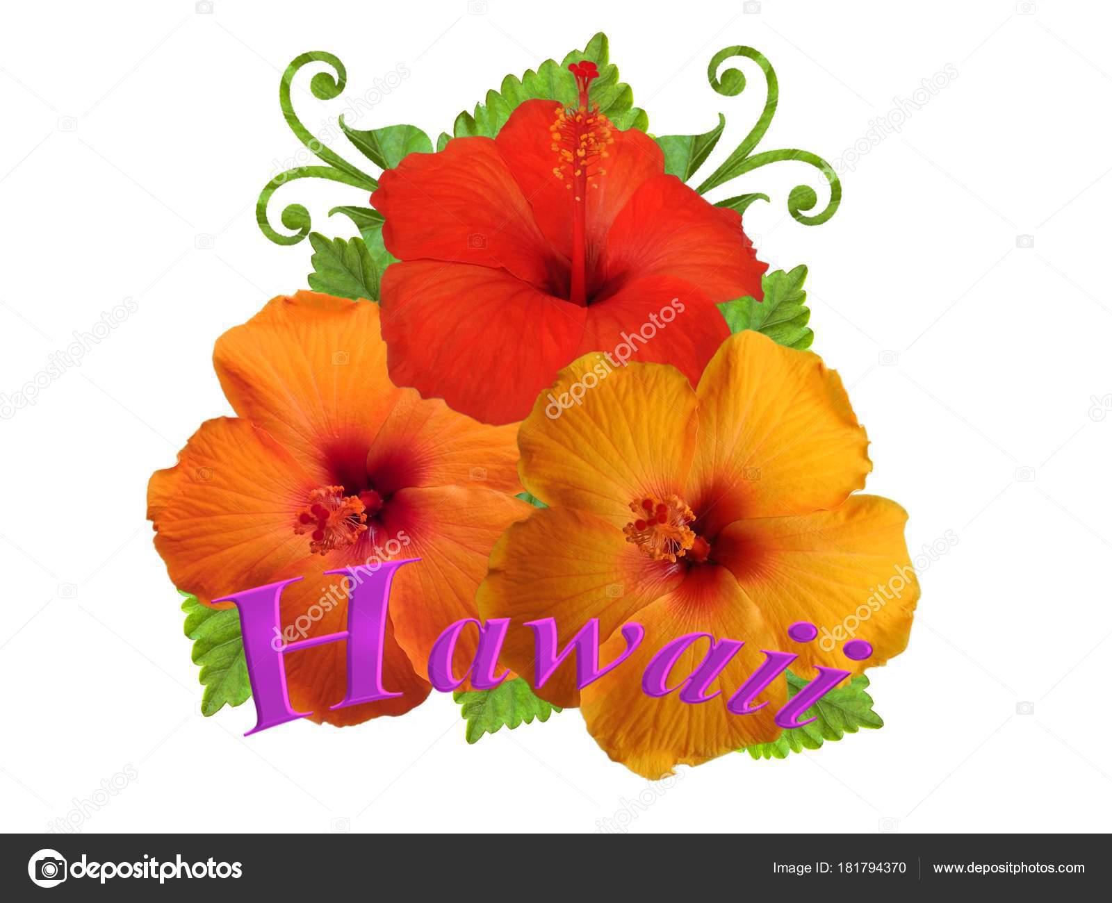 Hibiscus Flowers Different Colors Stock Photo Schwerin 181794370