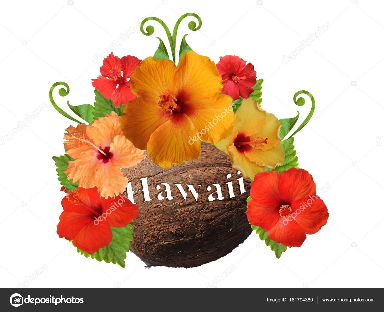 Hibiscus flowers different colors stock photo schwerin 181794380 hibiscus flowers different colors stock photo izmirmasajfo