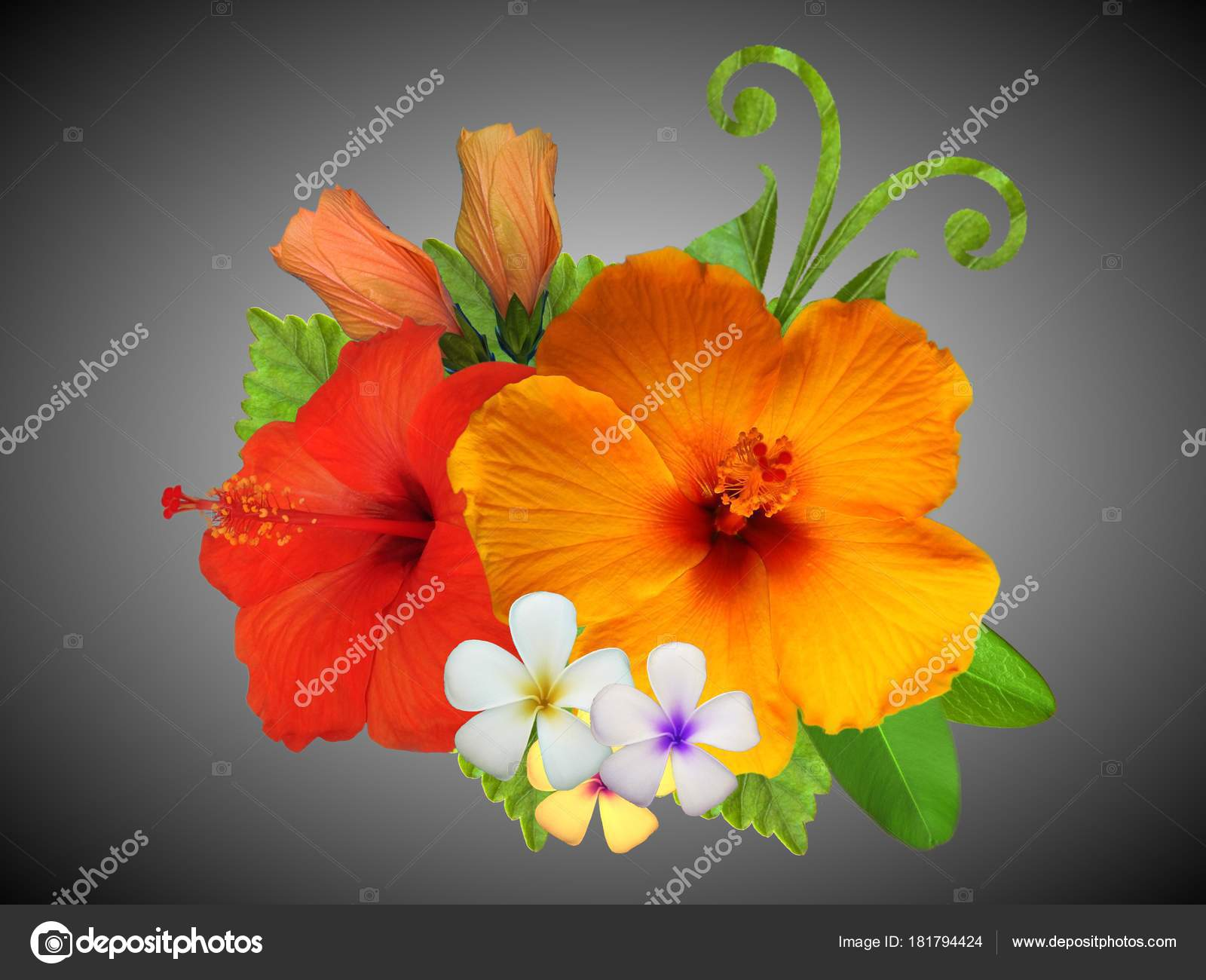 Hibiscus Flowers Different Colors — Stock Photo © Schwerin #181794424