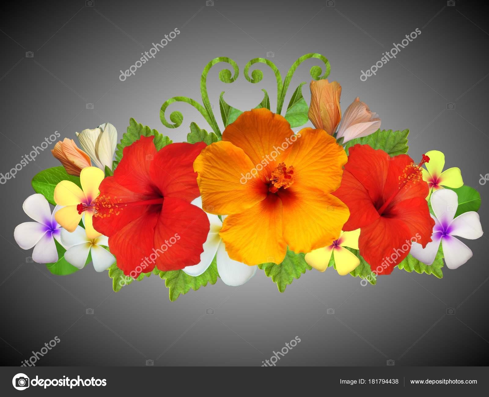 Hibiscus Flowers Different Colors — Stock Photo © Schwerin #181794438