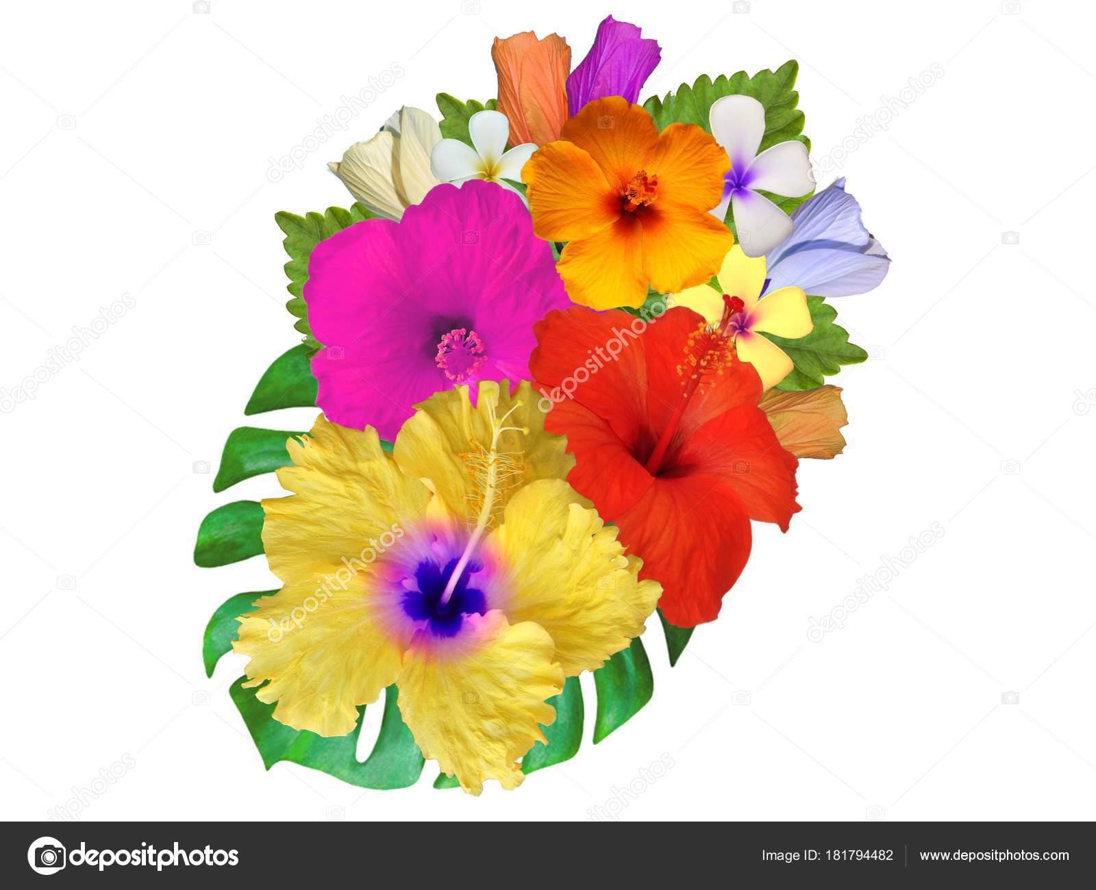 Hibiscus Flowers Different Colors Stock Photo Schwerin 181794482