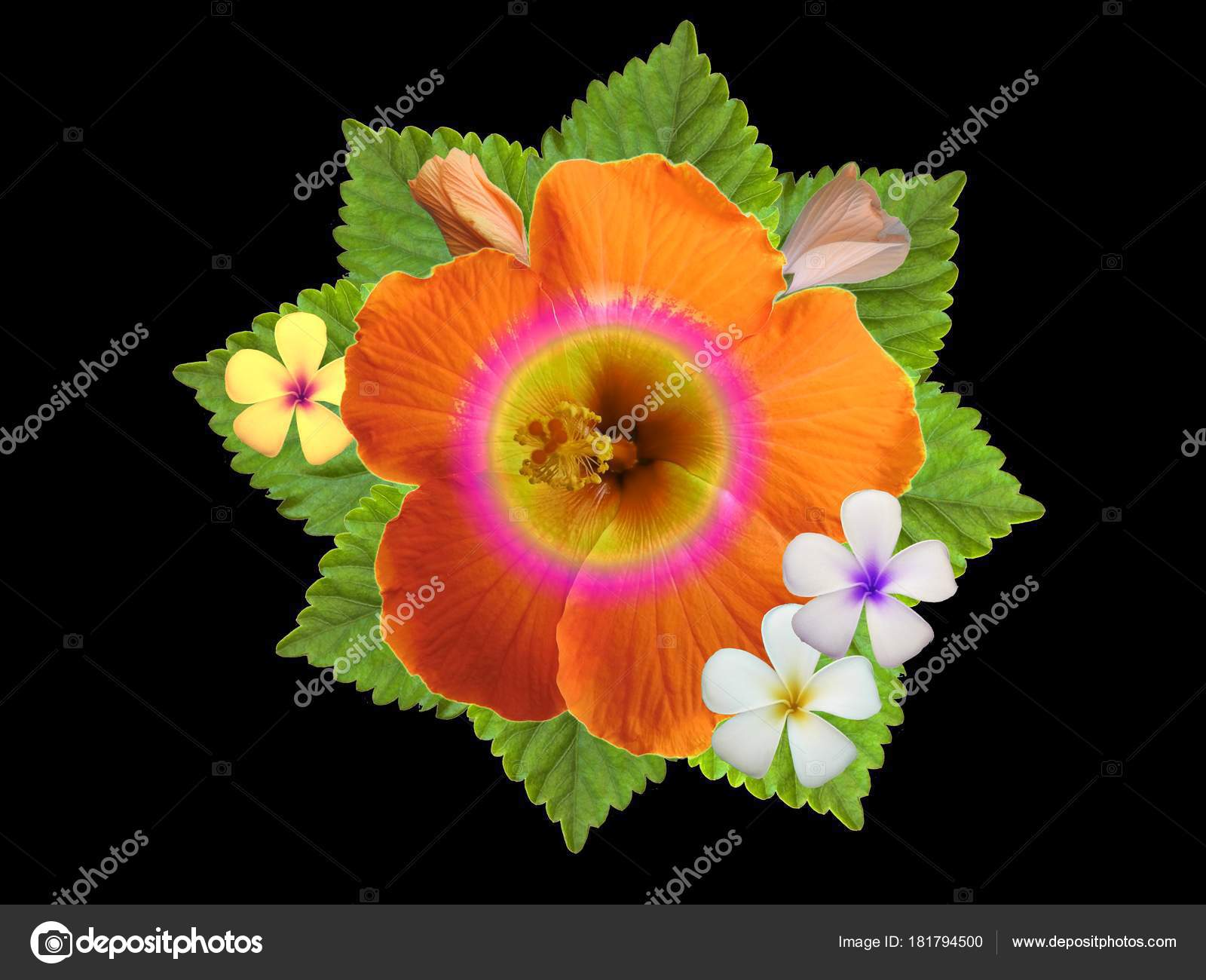 Hibiscus flowers different colors stock photo schwerin 181794500 hibiscus flowers different colors stock photo izmirmasajfo