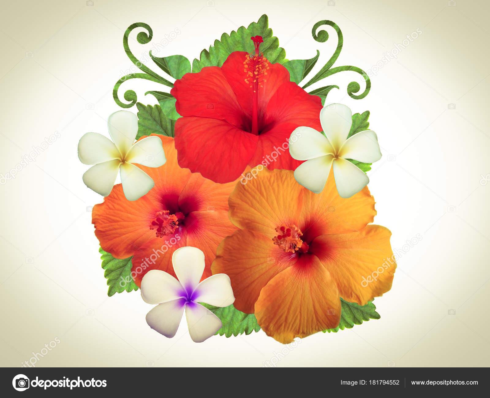 Hibiscus Flowers Different Colors — Stock Photo © Schwerin #181794552