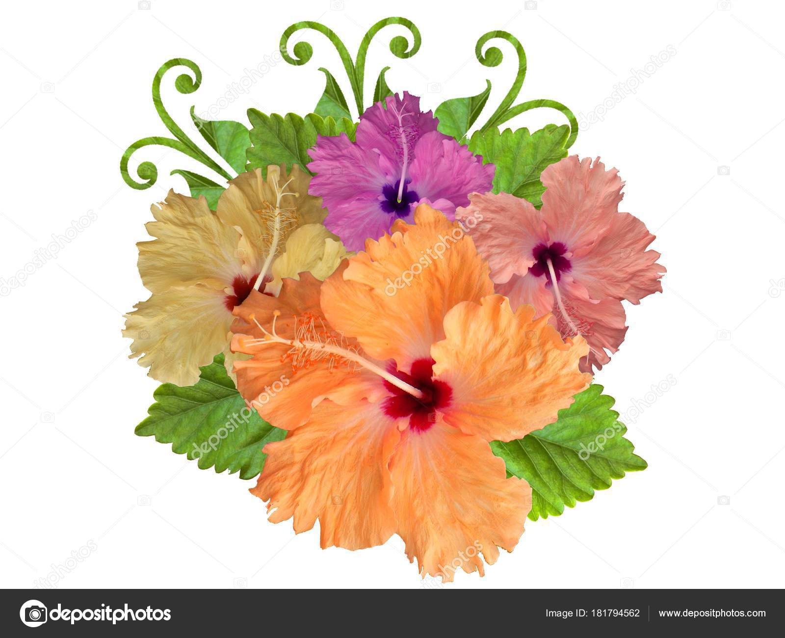 Hibiscus Flowers Different Colors Stock Photo Schwerin 181794562