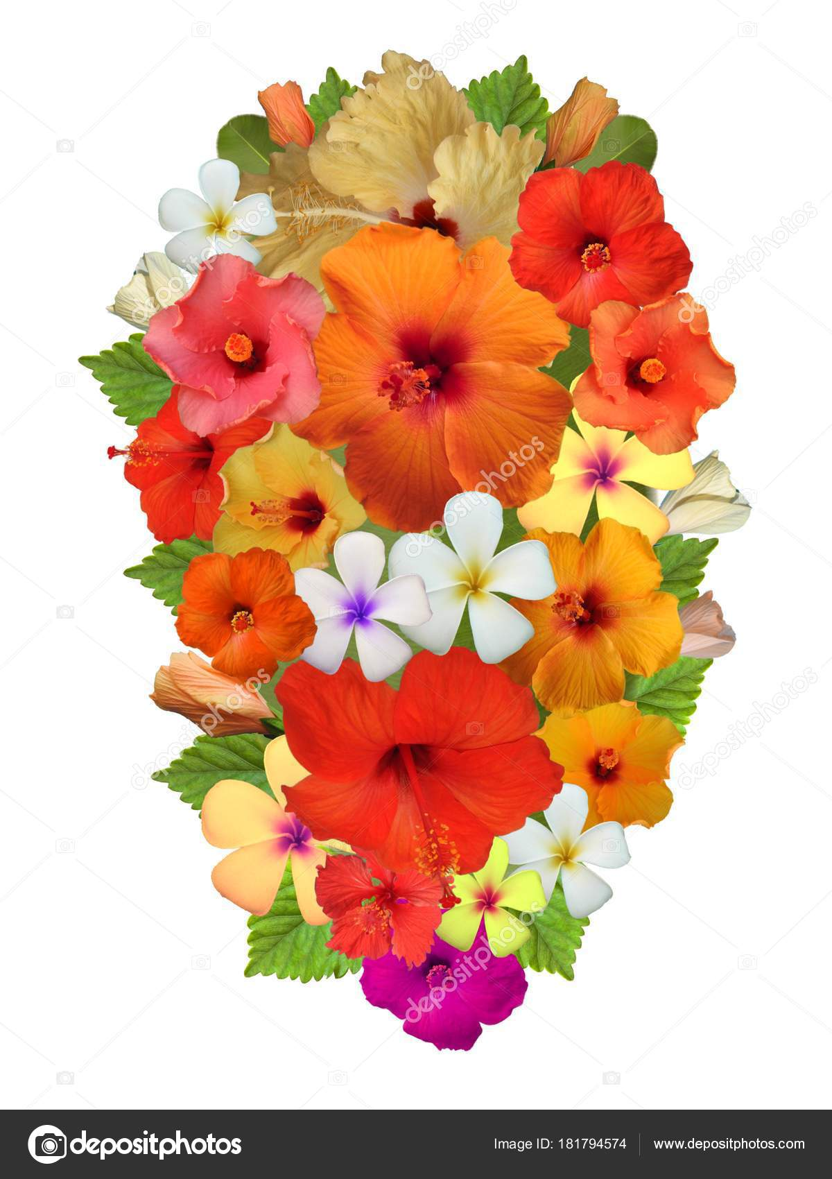 Hibiscus Flowers Different Colors — Stock Photo © Schwerin #181794574