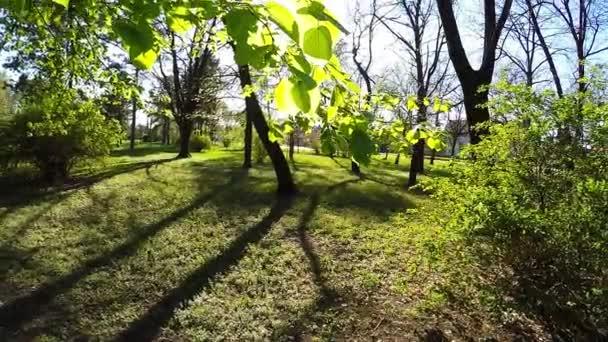 Fa ágai, erdő, a fény sütött nap keresztül