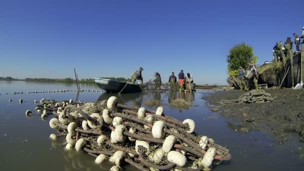 Chov sladkovodních ryb - dělníků vykládání úlovků. Velká skupina pracovníků sklizeň kaprů z rybník. Rybářský průmysl. Čerstvé ryby na trh