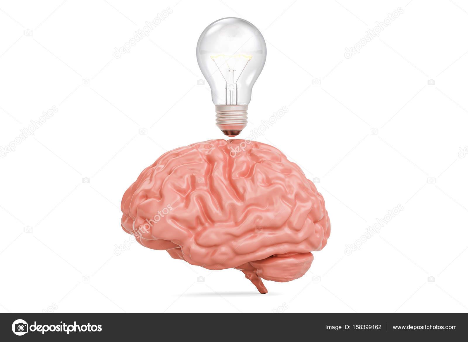 Light bulb under brain, idea concept. 3D rendering — Stock Photo ...