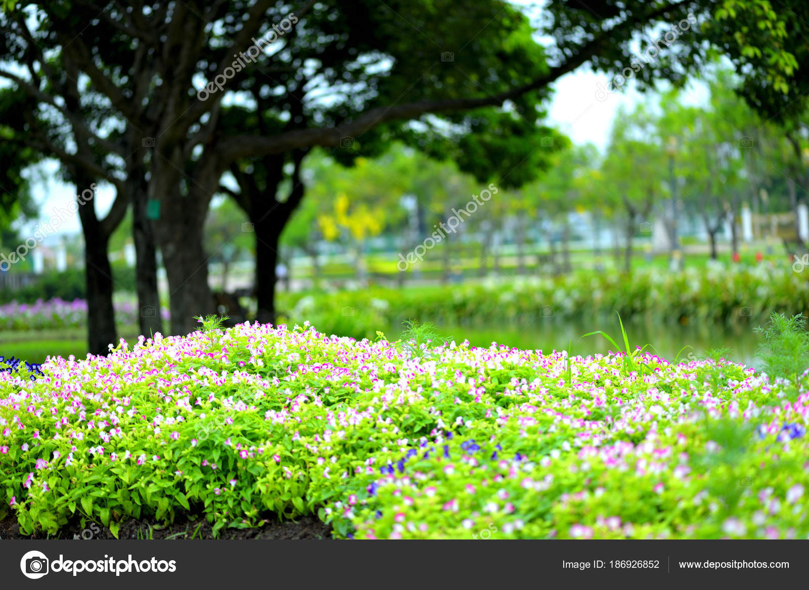 Beautiful Spring Flowers In Garden Nature Background Stock Photo
