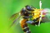 Včela na krásné květiny