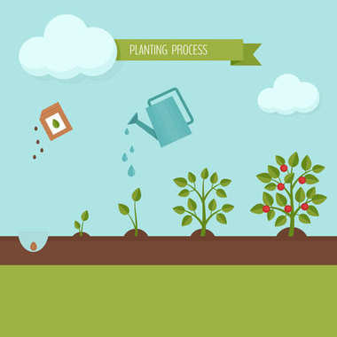 Planting process infographic. Growth stages. Steps of plant growth. Flat design, vector illustration.