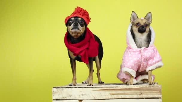 Vicces kutyák-ban téli ruhák.