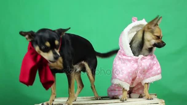 Lustige Hunde in Winterkleidung.