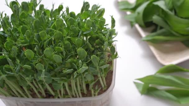 Nahaufnahme von wachsenden mikrogrünen Erbsensprossen und Bärlauchblättern auf einem Teller. Frisches Gemüse voller Vitamine. Frühling, moderne und gesunde Ernährung und Lifestylekonzept.