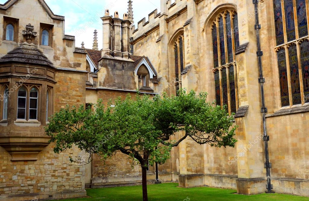 Apple tree at Trinity college,University of Cambridge,UK