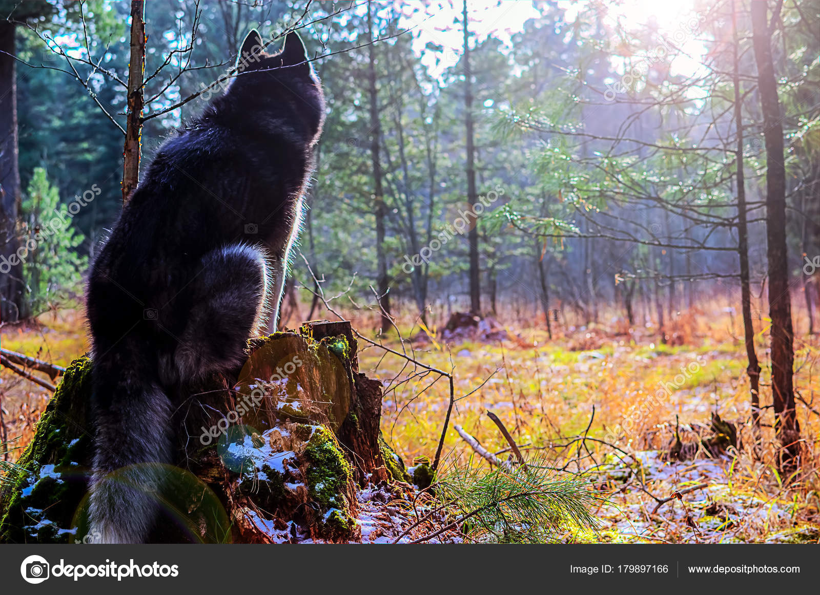 silhouette d un chien assis photographie westsib 179897166. Black Bedroom Furniture Sets. Home Design Ideas