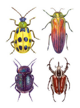 watercolor illustration insects - bugs