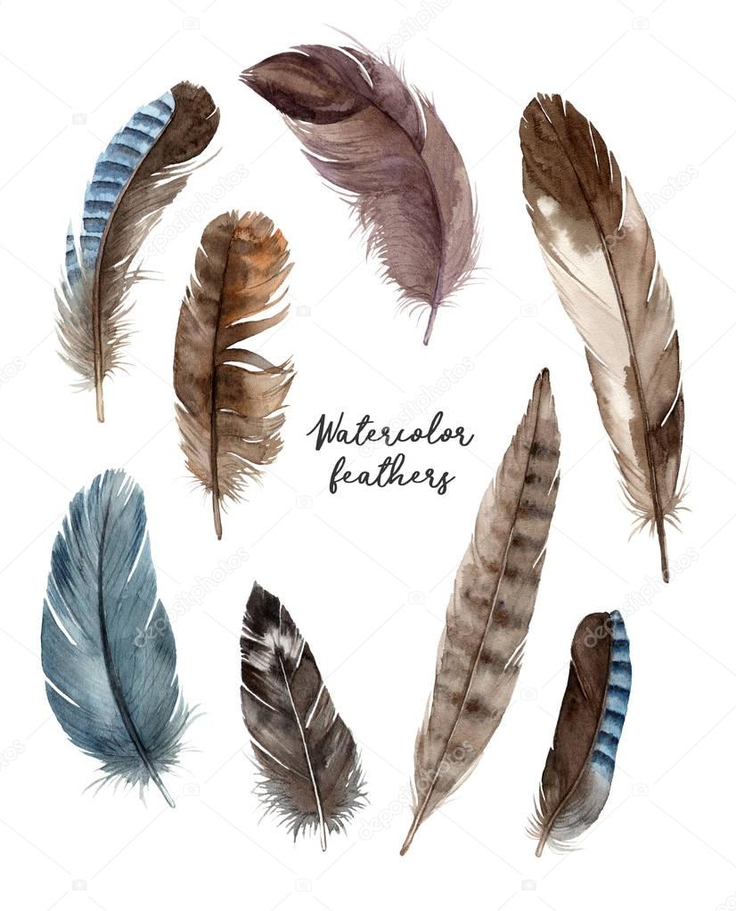 watercolor bird's feathers