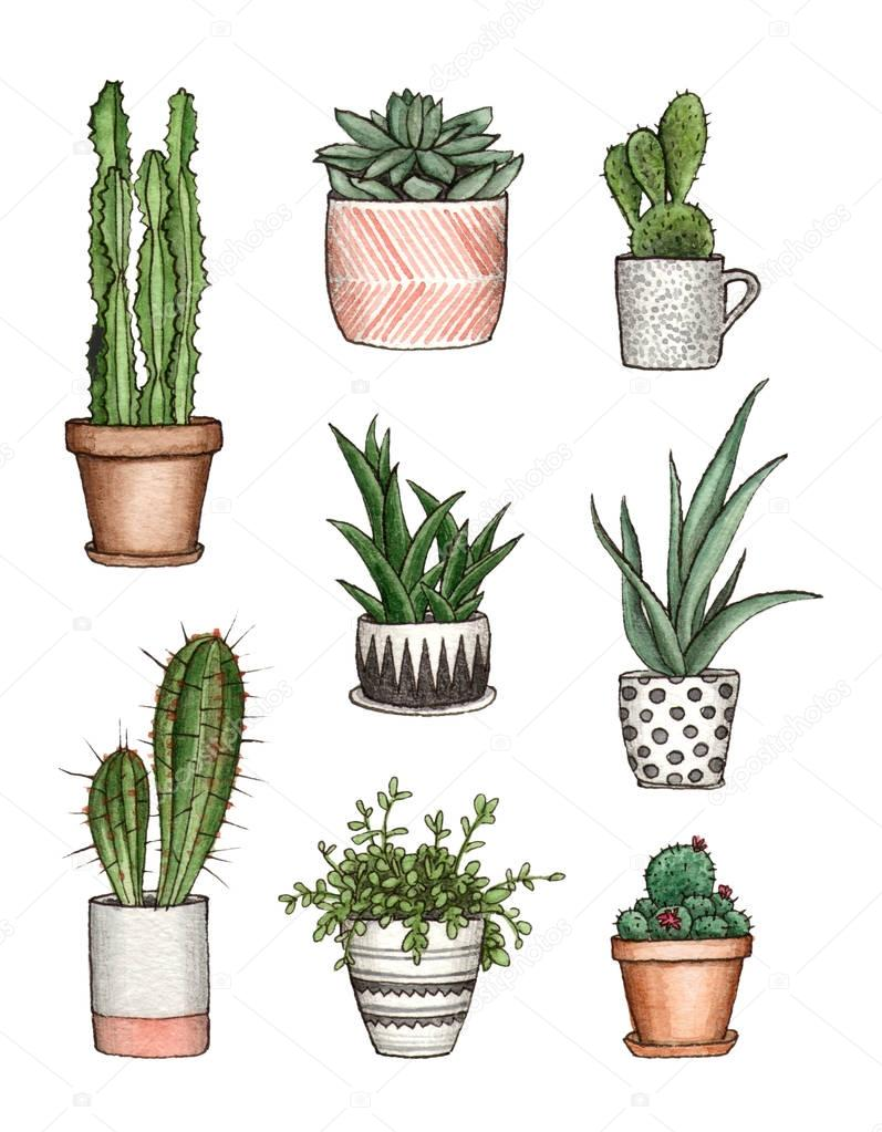 watercolor illustration home plants.