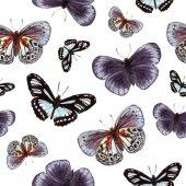 akvarell varrat nélküli mintát pillangók