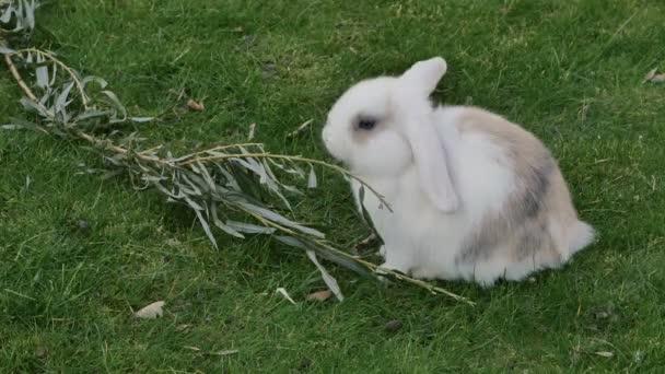 Bílý králík jíst trávu