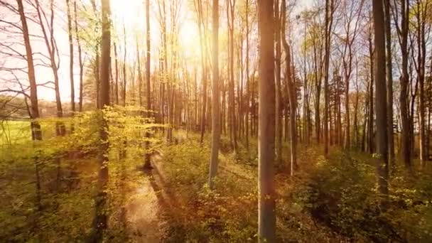 aerial view trees forest silhouette springtime sun flare light nature plants