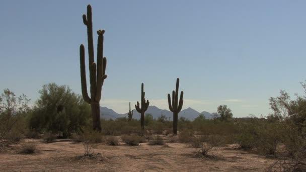 Arizona saguaro és hegyek