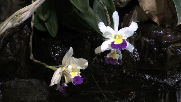 orchidea csepegő víz
