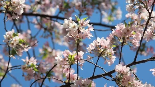 rózsaszín virágos virágszirmok