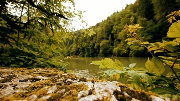 River Zelená příroda