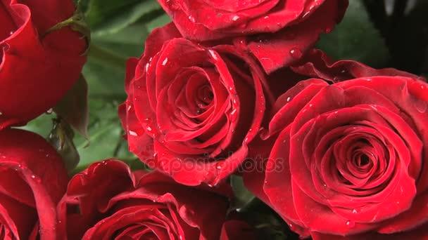 rotující červené růže