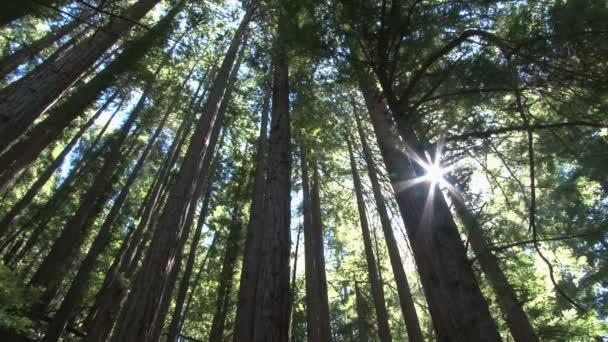 slunce svítí skrz husté lese
