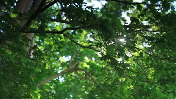 slunce prosvítající stromů
