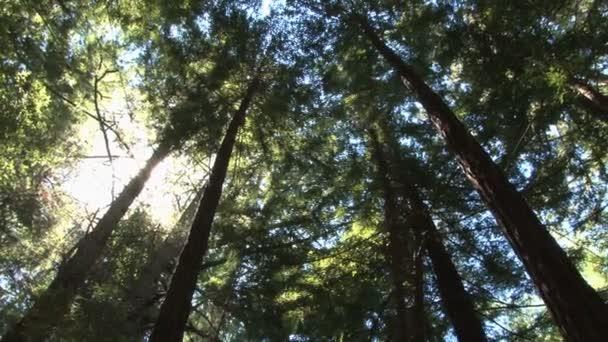 horní části redwoods drak