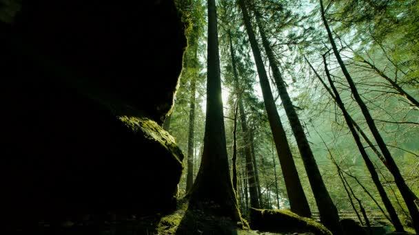 stromy v Les lesy mystický lesní zelená příroda pozadí
