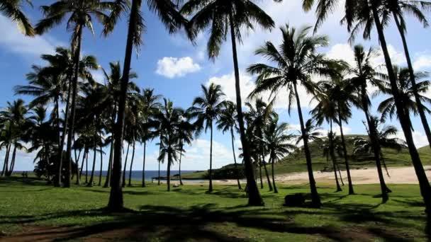 trópusi palm tree strand oneaster island