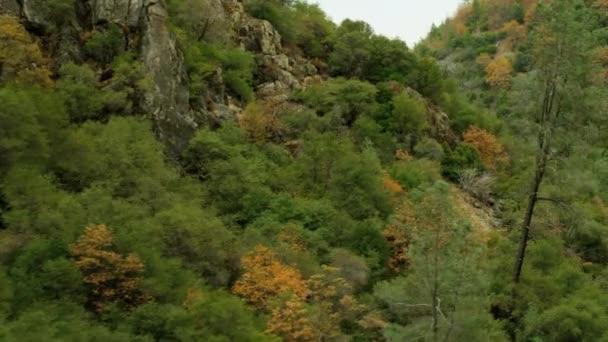 valley forest hillside