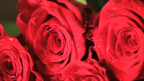 nedves piros rózsaszirom közelről