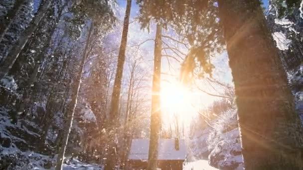 zimní les Sníh padající zpomalené magická hodina západ slunce