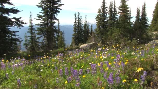 žluté a fialové květy na vrcholu kopce