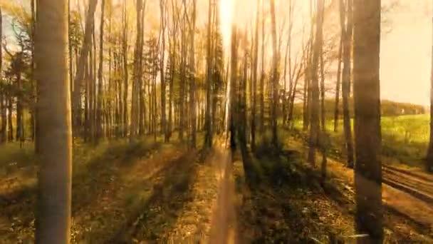Woods lesní stromy zelené přírody pozadí