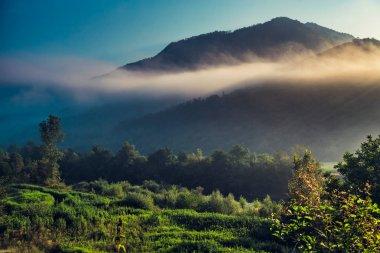 morning fog over the forest